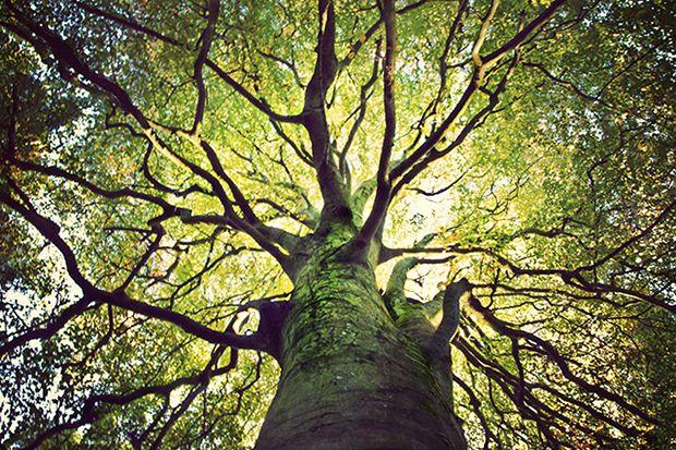 massivetree